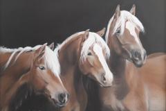 drei-pferde